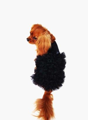 Red Carpet Ruffle Dog Dress in Black