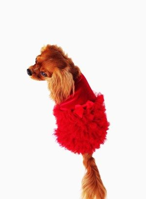 Red, Red Carpet Ruffle Dog Dress